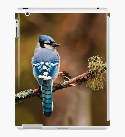 Blue Jay On Branch iPad Case/Skin