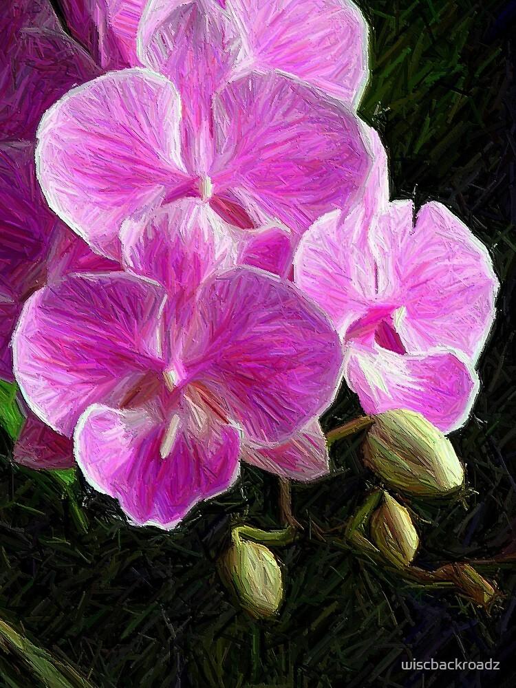 Pretty in Pink by wiscbackroadz