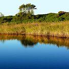 Between the Creek & the Ocean by byronbackyard