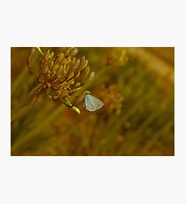 Vintage Style Butterfly Photographic Print