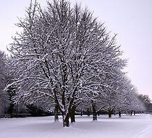 Snowy Avenue by Greg Webb
