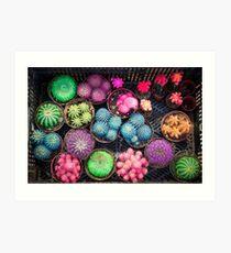 Cactus rainbow Art Print