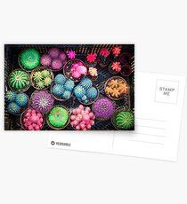 Cactus rainbow Postcards