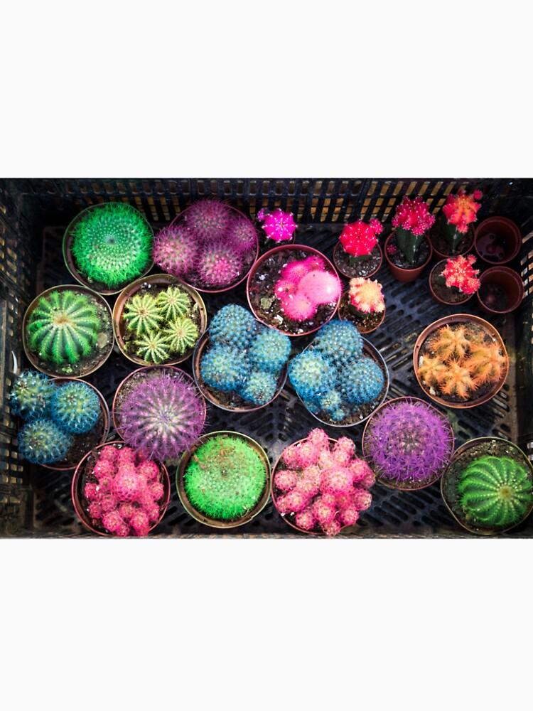 Cactus rainbow by aiinojani