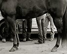 Hot Legs by photosbytony