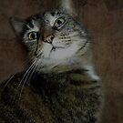 CAT by Shelly Harris