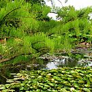 Green Paradise - The Lily Pond at Hyde Hall von BlueMoonRose