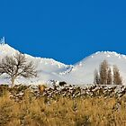 Whiteout On The Hills by Len Bomba