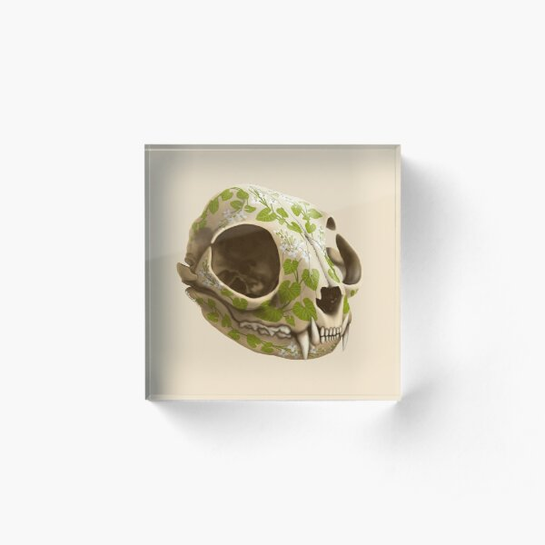 cat skull decorated with wasabi flowers Acrylic Block