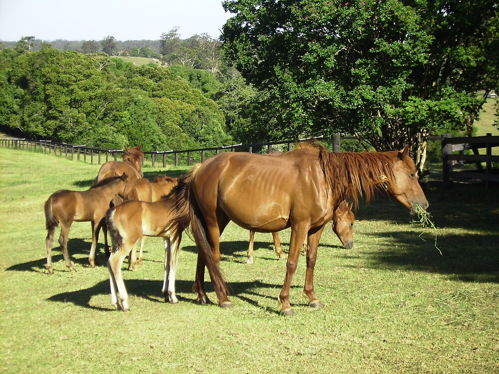 Brumby Mares & Their Foals. by Mywildscapepics