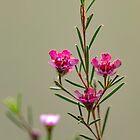 Empfindliche rosa Blumen auf Grün verwischten Hintergrundnahaufnahme von Emma Grimberg