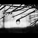 Northern swamp upside down by Yana Art