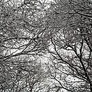 Snow Covered Trees 03 by Jason Moore