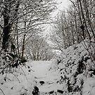 Snow Landscape 04 by Jason Moore