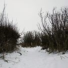 Snow Landscape 05 by Jason Moore