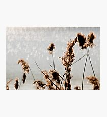 By the Waterside Photographic Print