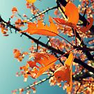 Orange leaves by Lenka Vorackova