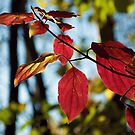 Branch with red leaves by Lenka Vorackova