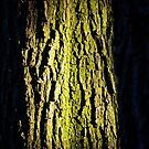 Tree bark in sunlight by Lenka Vorackova