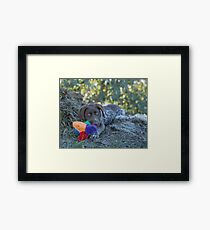 My Puppy Toys... Framed Print