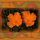 California Poppies by CarolM
