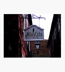 Alley Cats! Photographic Print