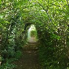 A Green And Leafy Lane (Wiltshire, England) by lezvee