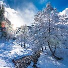 Sunset in the forest covered with snow by naturalis