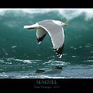 Seagull by Carlos Casamayor