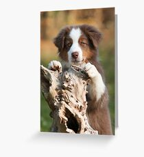 Curious Aussie Puppy Greeting Card