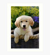 Charming Goldie Puppy Art Print