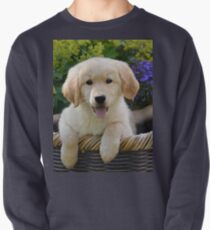 Charming Goldie Puppy Pullover