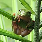 Green Tree Frog! by Gabrielle  Lees
