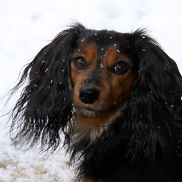 Bella's First Snow by EstherJohnson