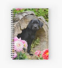 Lab puppy playing hide and seek Spiral Notebook