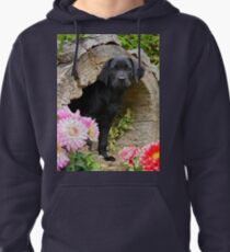 Lab puppy playing hide and seek Pullover Hoodie