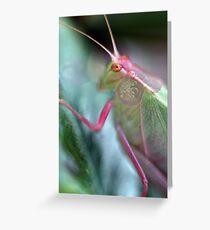Grasshopper Colours Greeting Card