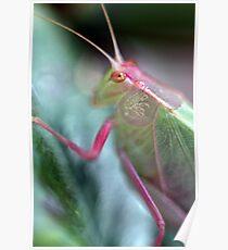 Grasshopper Colours Poster