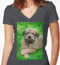 Cool-Puppy, Berger Picard  Women's Fitted V-Neck T-Shirt
