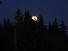 Full moon in Canada by Matthew Walmsley-Sims