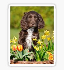Spaniel puppy amidst spring flowers Sticker