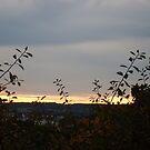 sunset between the bushes by xxnatbxx