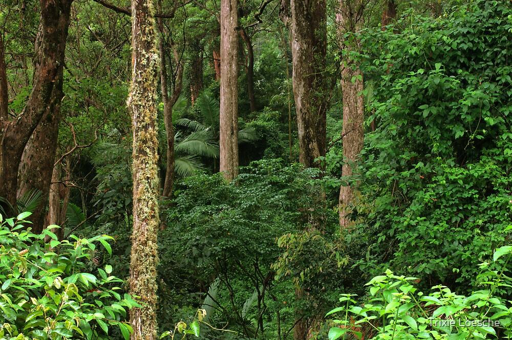 Rainforest by altmarkphoto