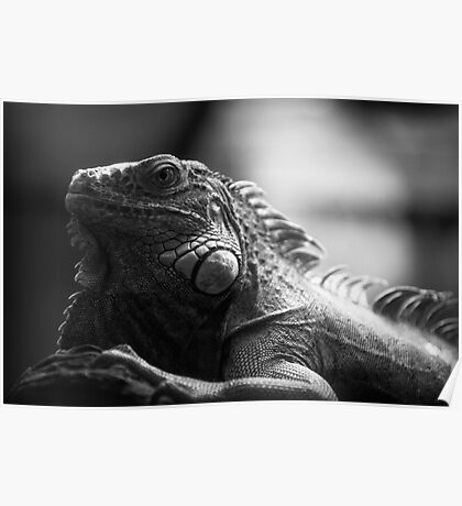 Iguana In Black and White Poster