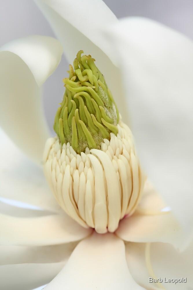 Creamy Magnolia by Barb Leopold
