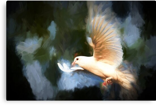 The Dove | A Symbol Of The Holy Spirit & Peace by Sean Duffy