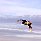 Gull in Flight by Trevor Kersley