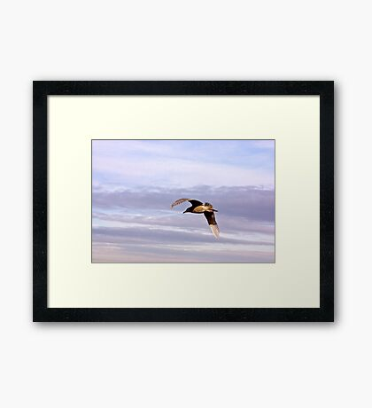 Gull in Flight Framed Print