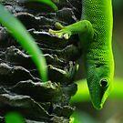 Bright Green Lizard by Derek Kan