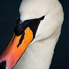 Swan Portrait by Brett Still